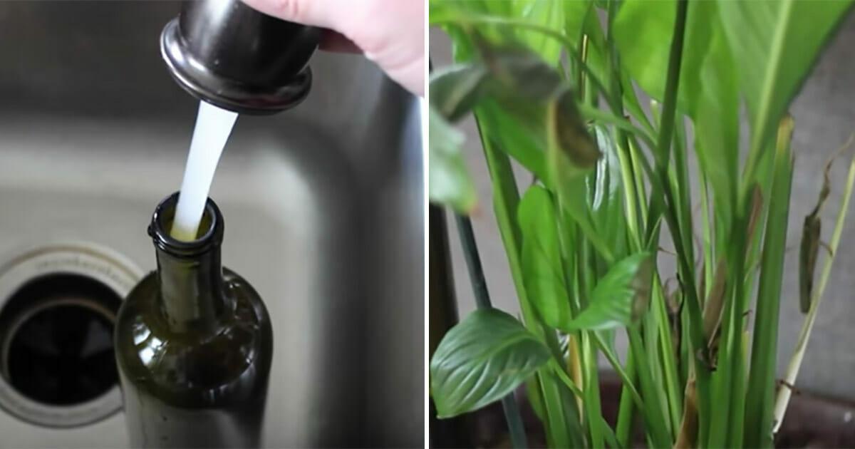 Mit Diesem Trick Giessen Sich Pflanzen Im Urlaub Von Selbst