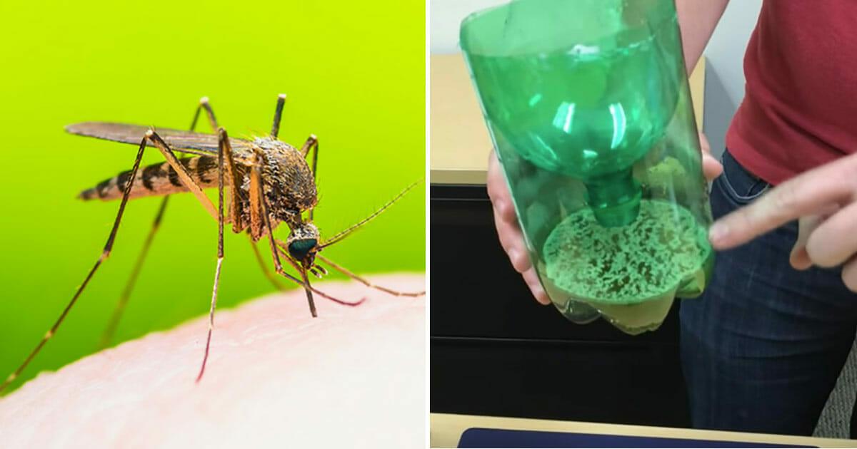 Mit dieser einfachen Mückenfalle könnt ihr den Sommer genießen