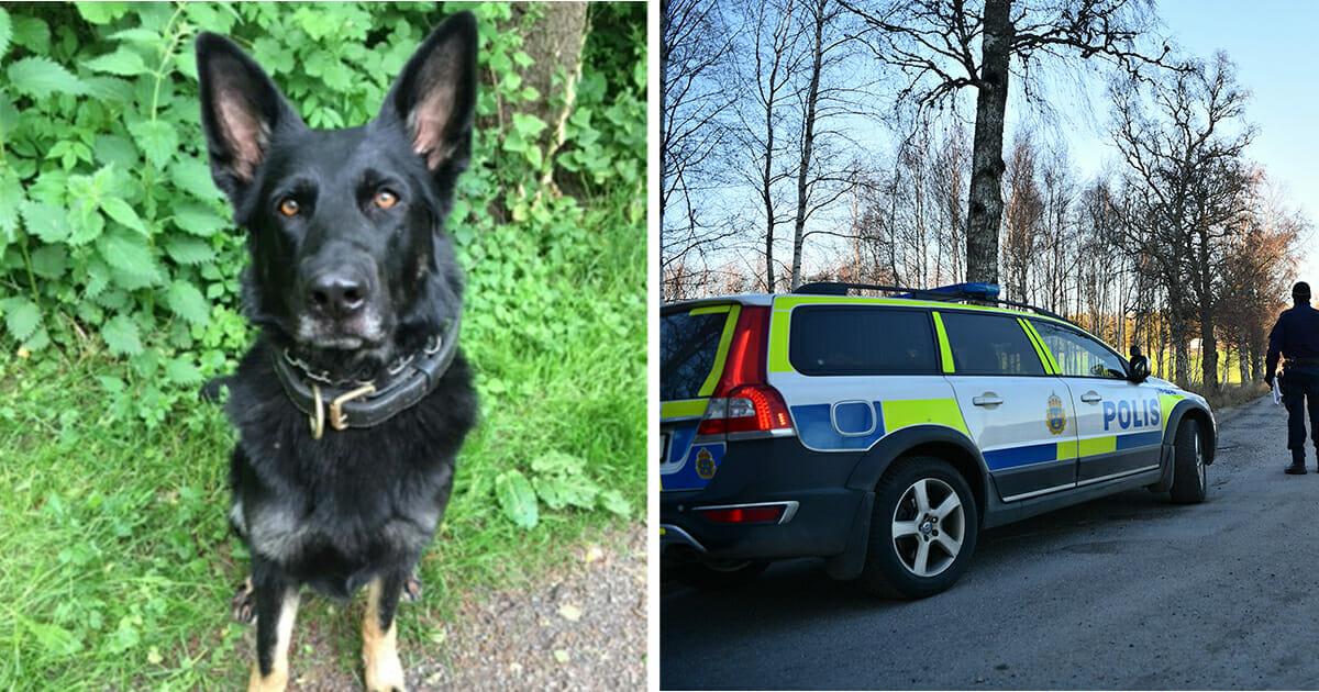 Polizei, Hund, Schweden