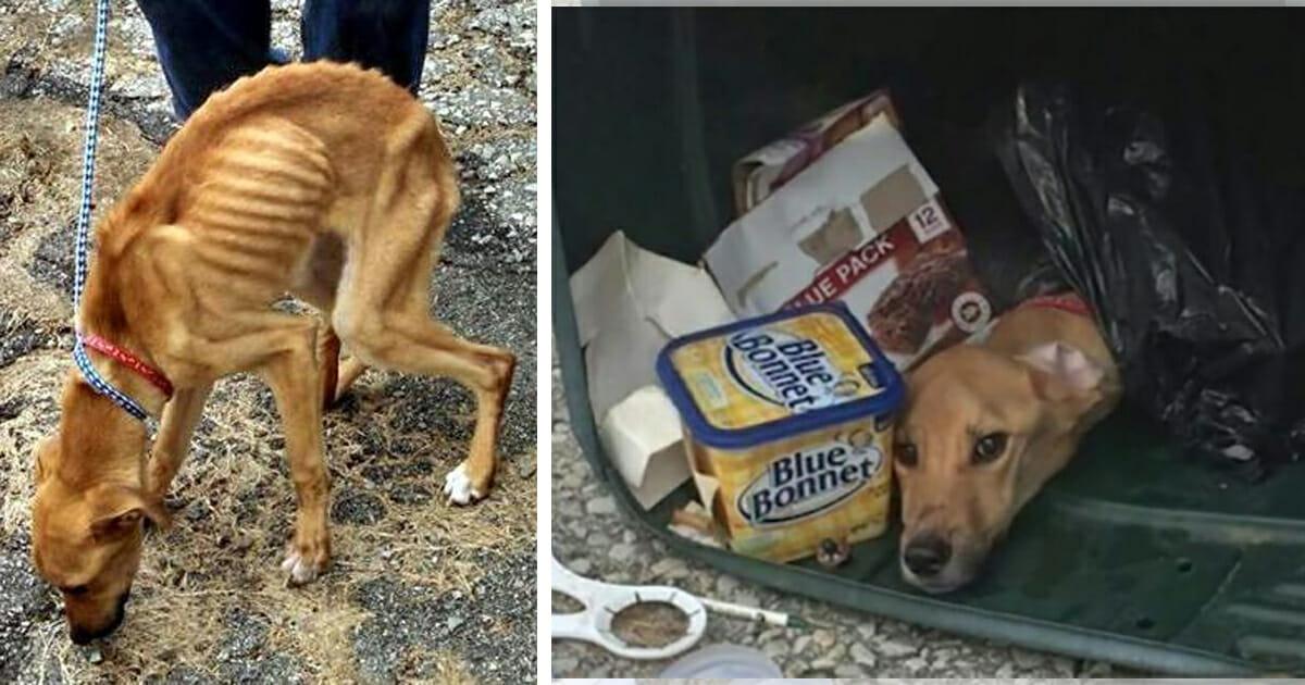 Mülltonne, Hund, Hinweis