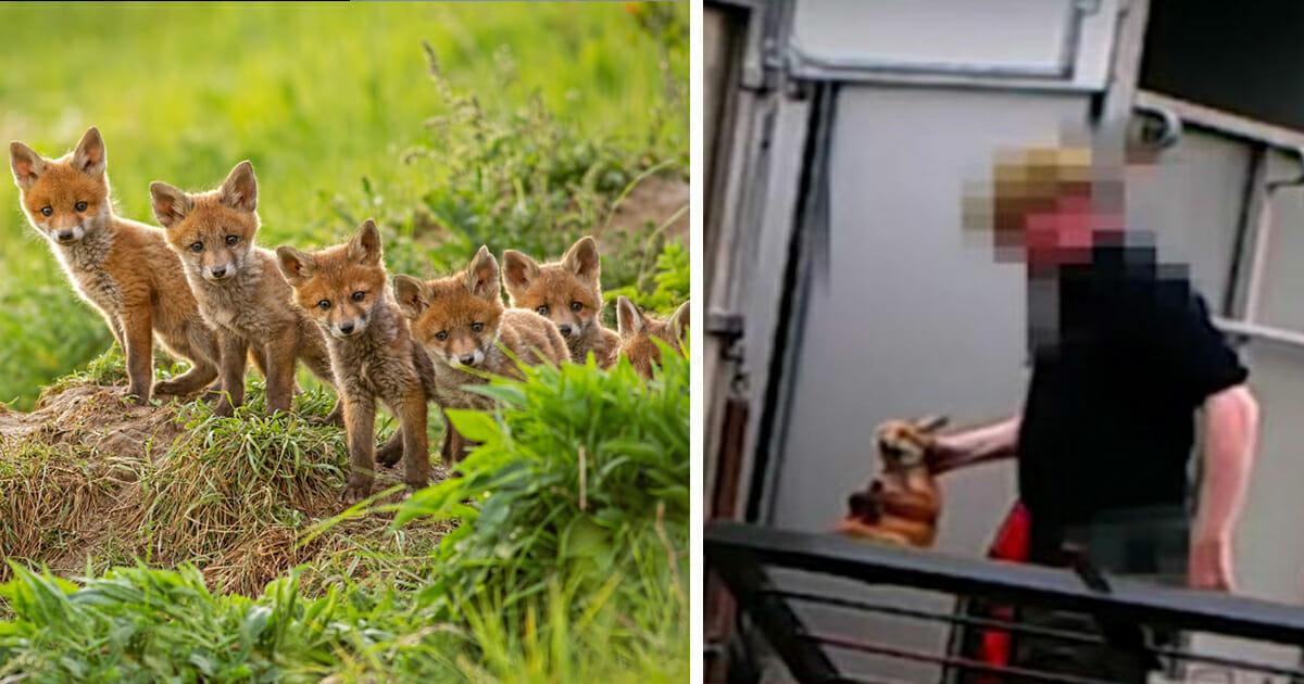 Tierschützer wütend