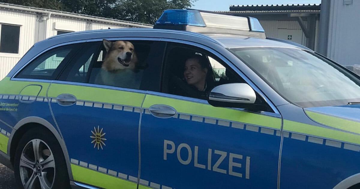 Polizei Mannheim Facebook