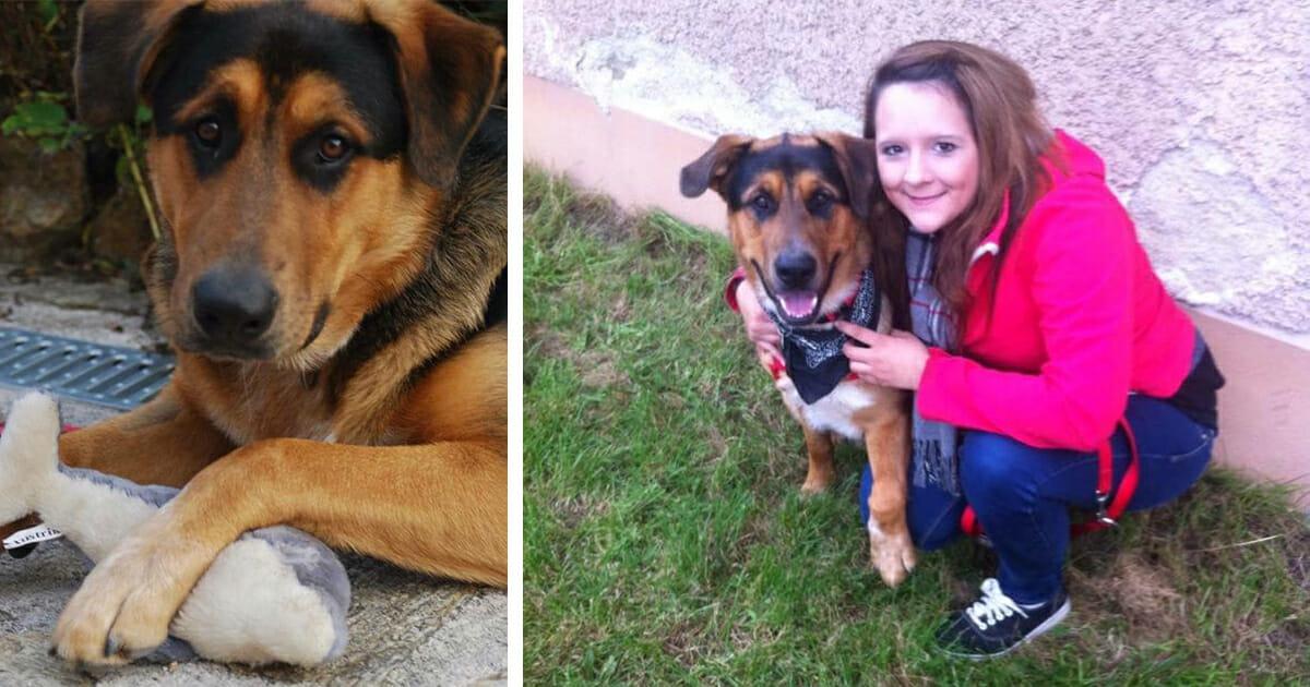 Facebook Hund Vermisst