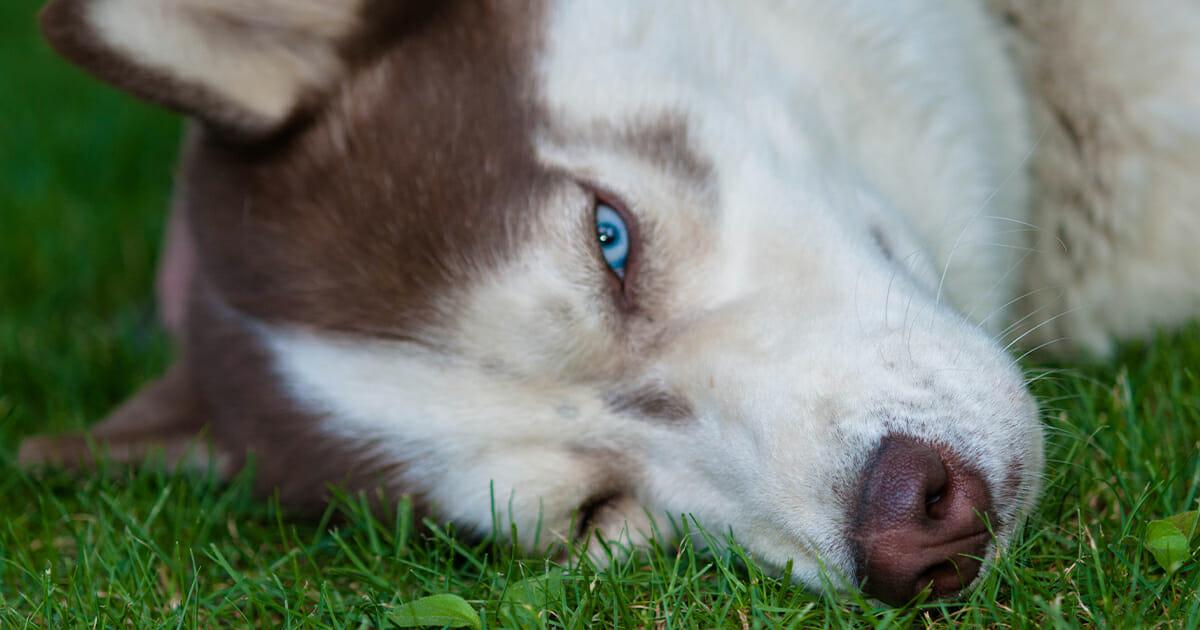 Hund Vergiften