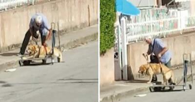 Hund, Einkaufswagen
