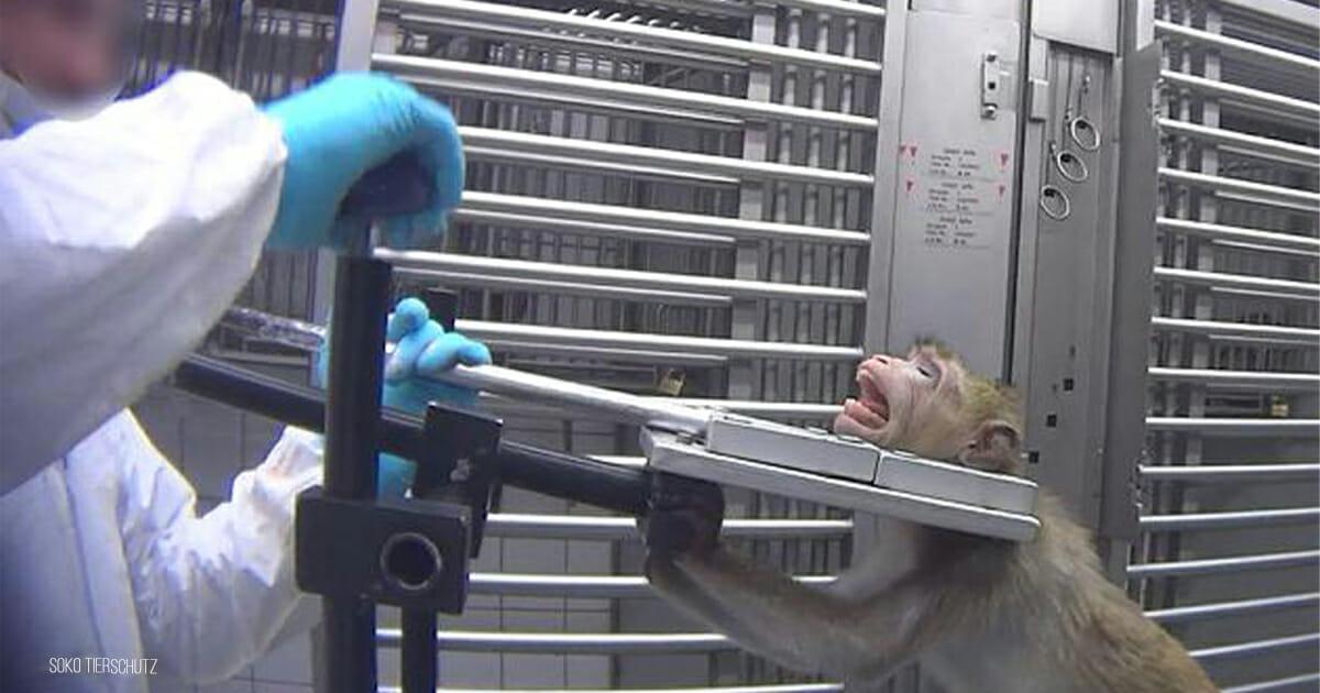 Affen, Hunde, Tierversuch