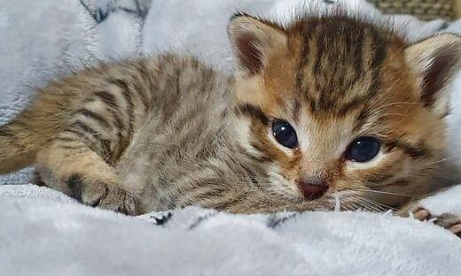 Katze; Katzenbaby