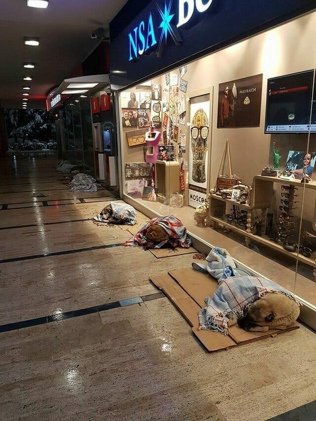 Straßenhunde dürfen während dem Winter in Shopping Center schlafen