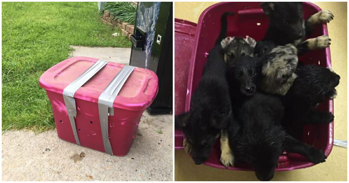 Soccorso animali trova scatola lasciata fuori tutta la ...