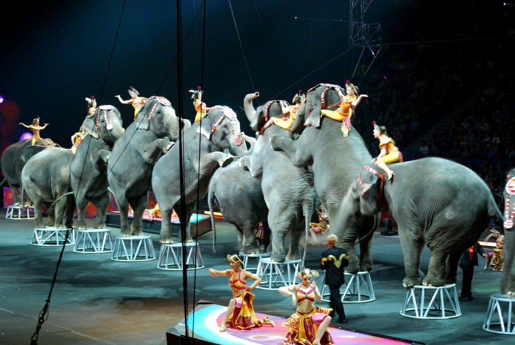 the history and nature of the circus The greatest showman p t barnum phineas taylor barnum information, facts, history and photos.