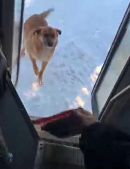 Водитель автобуса ежедневно делает остановку, чтобы накормить бездомную собаку…