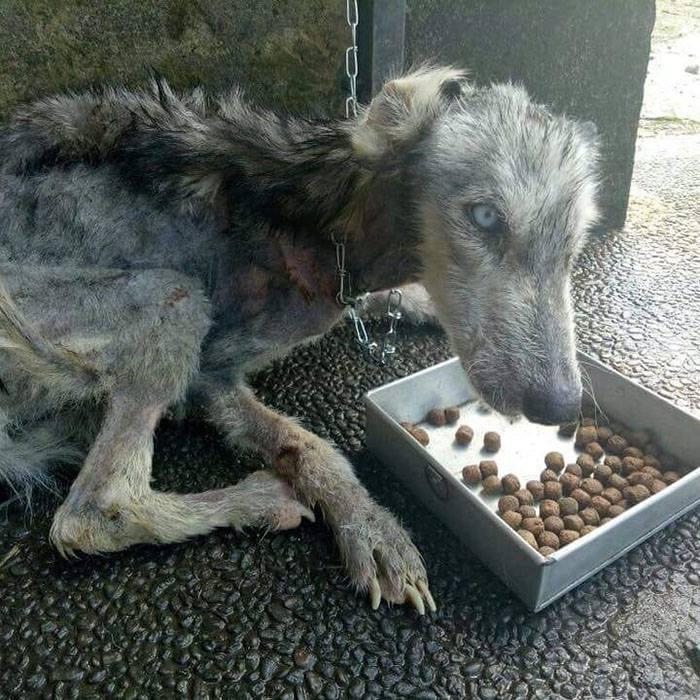 Брошенная собака была похожа на высохший скелет - 10 месяцев спустя её просто не узнать!
