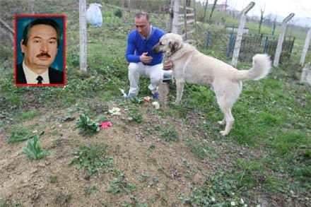 Elke dag loopt hond naar begraafplaats, toen ik begreep waarom stroomden de tranen langs mijn wangen