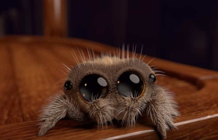 angst voor spinnen overwinnen