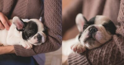 knuffelpuppy