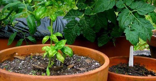 11 façons géniales d'utiliser du vinaigre dans votre jardin