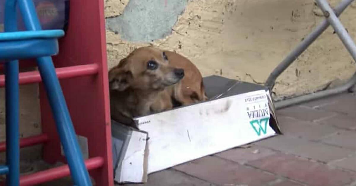 Chiot abandonné vit dans une boîte à chaussures - quand